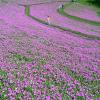 マザー牧場と葛西臨海水族園